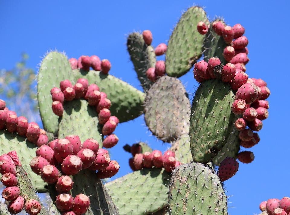 cactus-949234_960_720