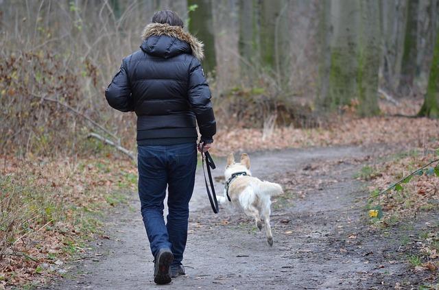 muž venčí psa